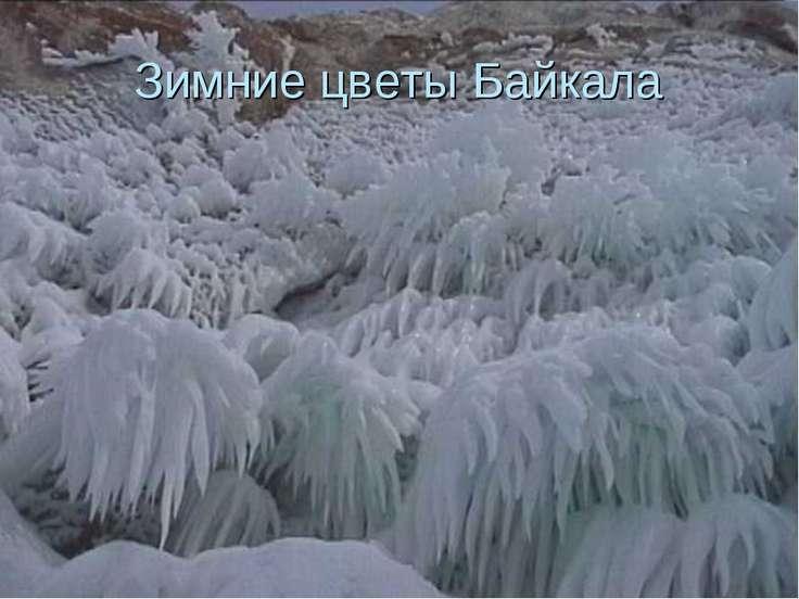 Зимние цветы Байкала