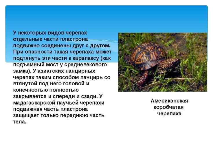 У некоторых видов черепах отдельные части пластрона подвижно соединены друг с...