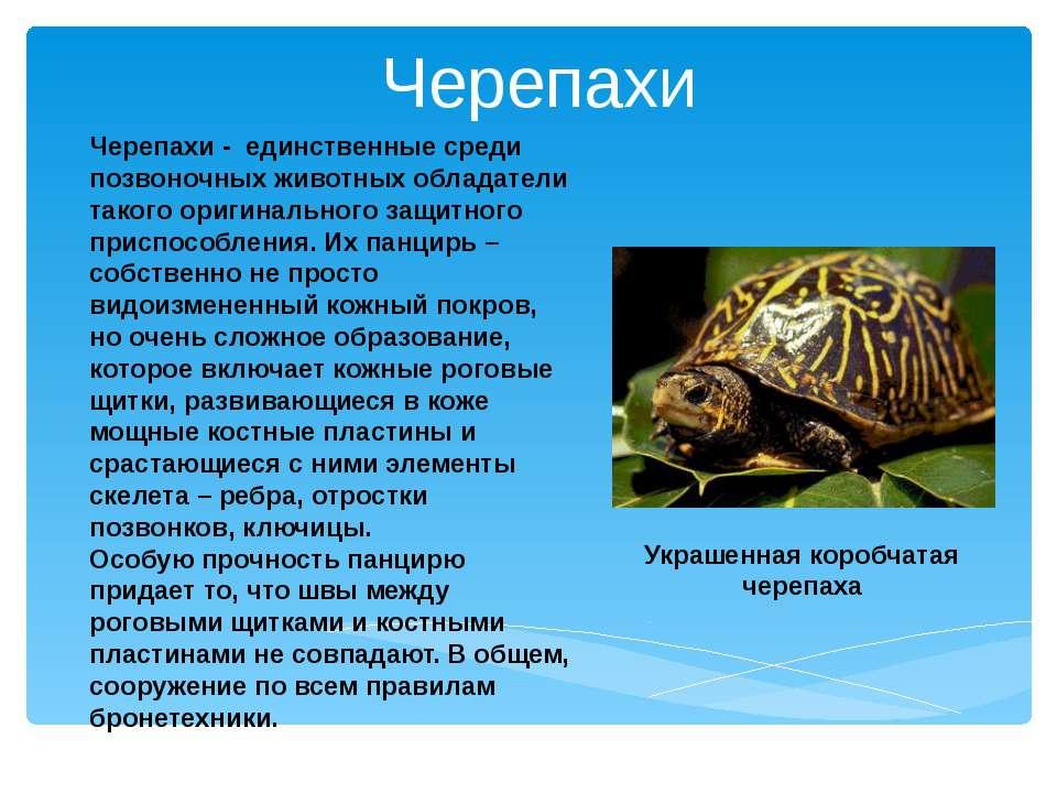 Черепахи - единственные среди позвоночных животных обладатели такого оригинал...
