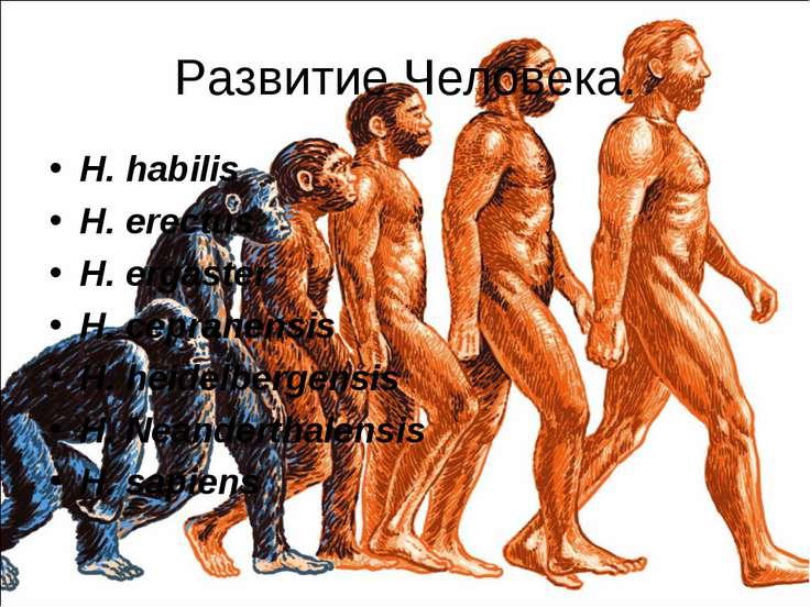Развитие Человека. H. habilis H. erectus H. ergaster H. cepranensis H. heidel...