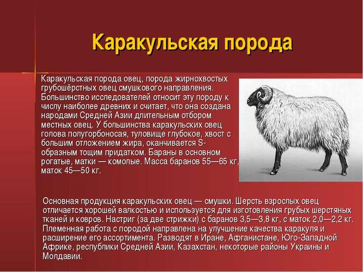 Каракульская порода Каракульская порода овец, порода жирнохвостых грубошёрстн...