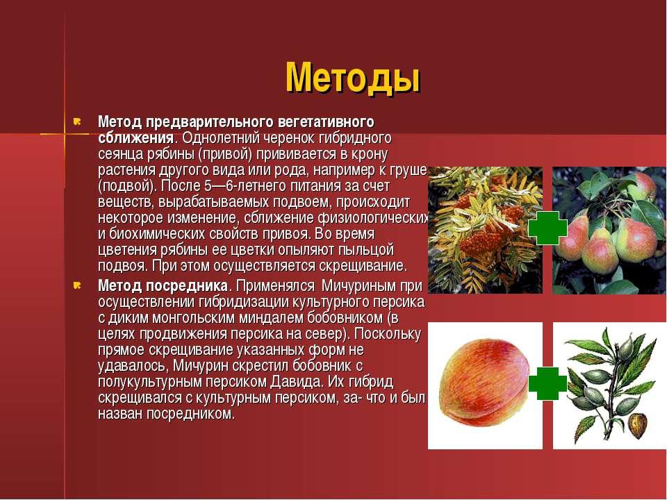 Методы Метод предварительного вегетативного сближения. Однолетний черенок гиб...