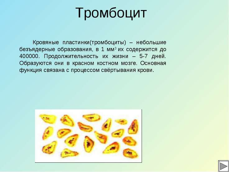 Тромбоцит Кровяные пластинки(тромбоциты) – небольшие безъядерные образования,...