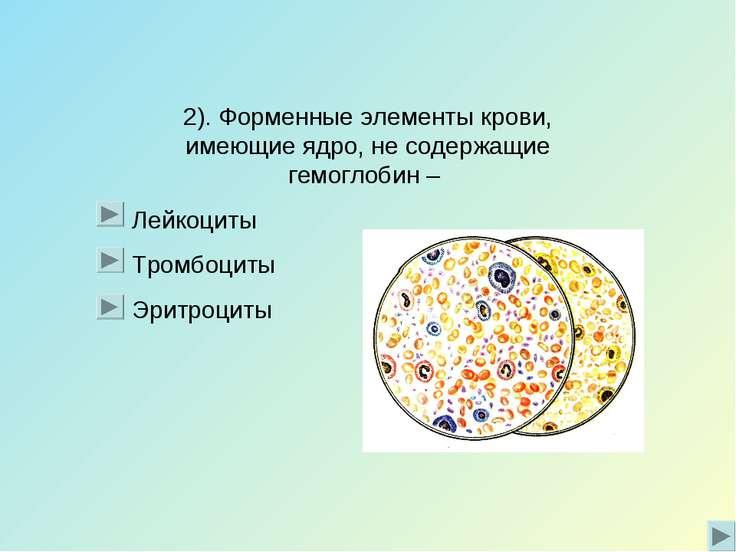2). Форменные элементы крови, имеющие ядро, не содержащие гемоглобин – Лейкоц...
