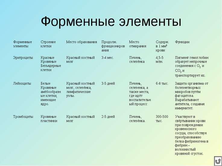 Форменные элементы Форменные элементы Строение клетки Место образования Продо...
