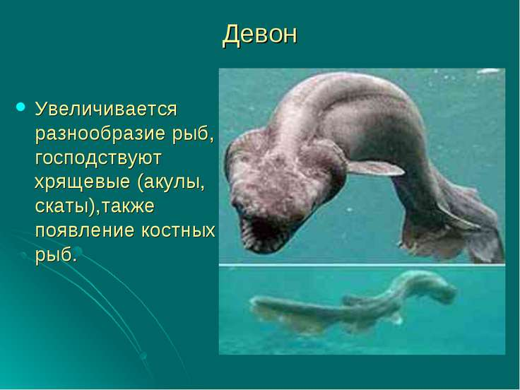 Девон Увеличивается разнообразие рыб, господствуют хрящевые (акулы, скаты),та...