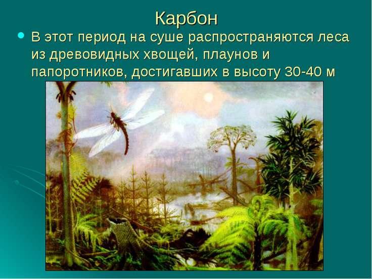 Карбон В этот период на суше распространяются леса из древовидных хвощей, пла...