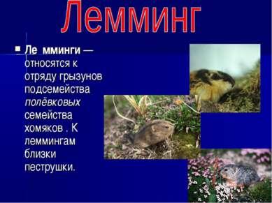 Ле мминги — относятся к отряду грызунов подсемейства полёвковых семейства хом...