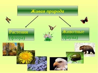 Живая природа Растения (флора) Животные (фауна)