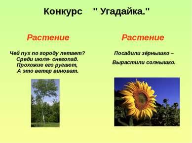 """Конкурс """" Угадайка."""" Растение Растение Чей пух по городу летает? Среди июля- ..."""