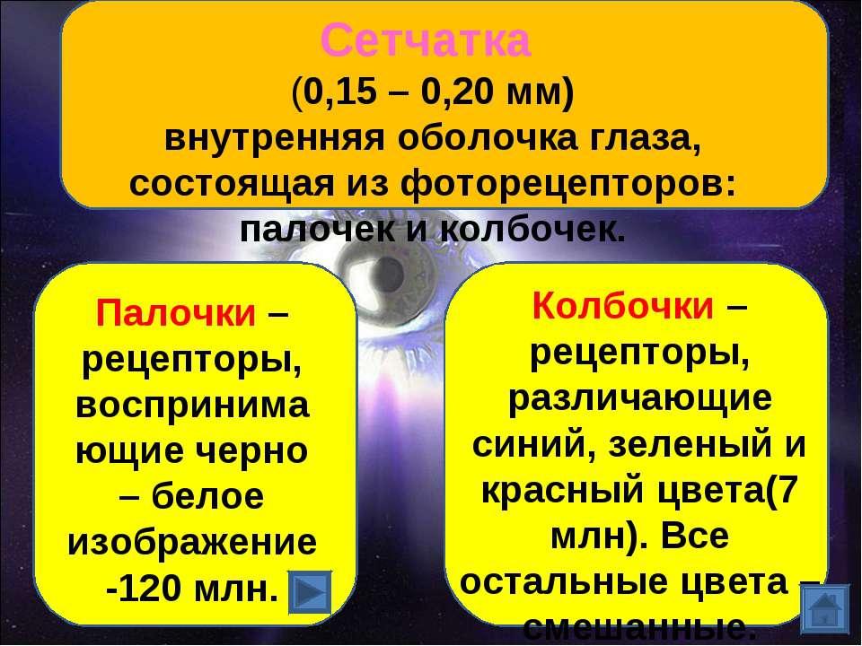 Сетчатка (0,15 – 0,20 мм) внутренняя оболочка глаза, состоящая из фоторецепто...