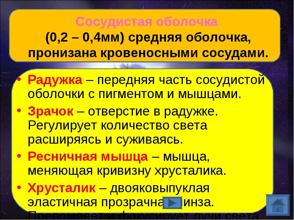 Сосудистая оболочка (0,2 – 0,4мм) средняя оболочка, пронизана кровеносными со...