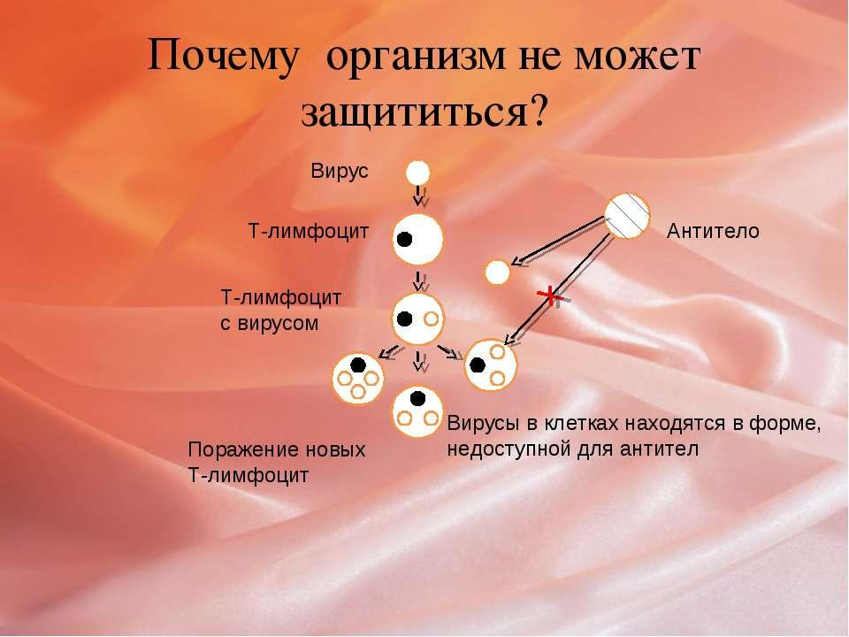 Почему организм не может защититься? Вирус Т-лимфоцит Т-лимфоцит с вирусом По...