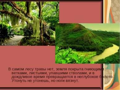 В самом лесу травы нет, земля покрыта гниющими ветками, листьями, упавшими ст...