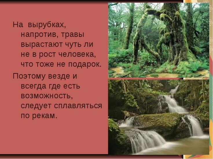 На вырубках, напротив, травы вырастают чуть ли не в рост человека, что тоже н...