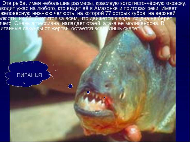 Эта рыба, имея небольшие размеры, красивую золотисто-чёрную окраску, наводит ...