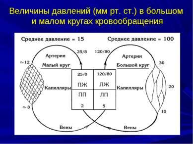 Величины давлений (мм рт. ст.) в большом и малом кругах кровообращения