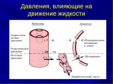 Давления, влияющие на движение жидкости