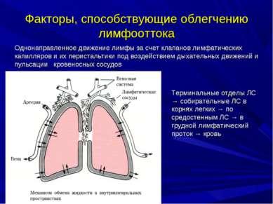 Факторы, способствующие облегчению лимфооттока Однонаправленное движение лимф...