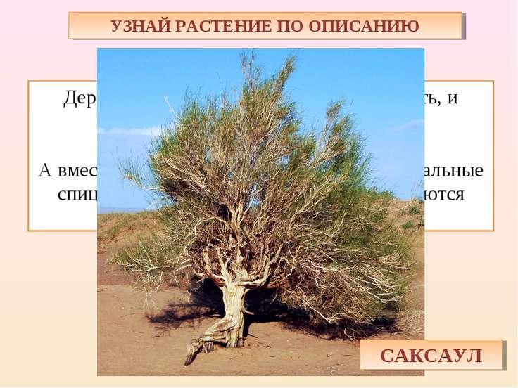 УЗНАЙ РАСТЕНИЕ ПО ОПИСАНИЮ Дерево пустыни – ствол крепкий, как кость, и тяжёл...