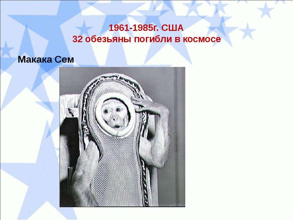 1961-1985г. США 32 обезьяны погибли в космосе Макака Сем