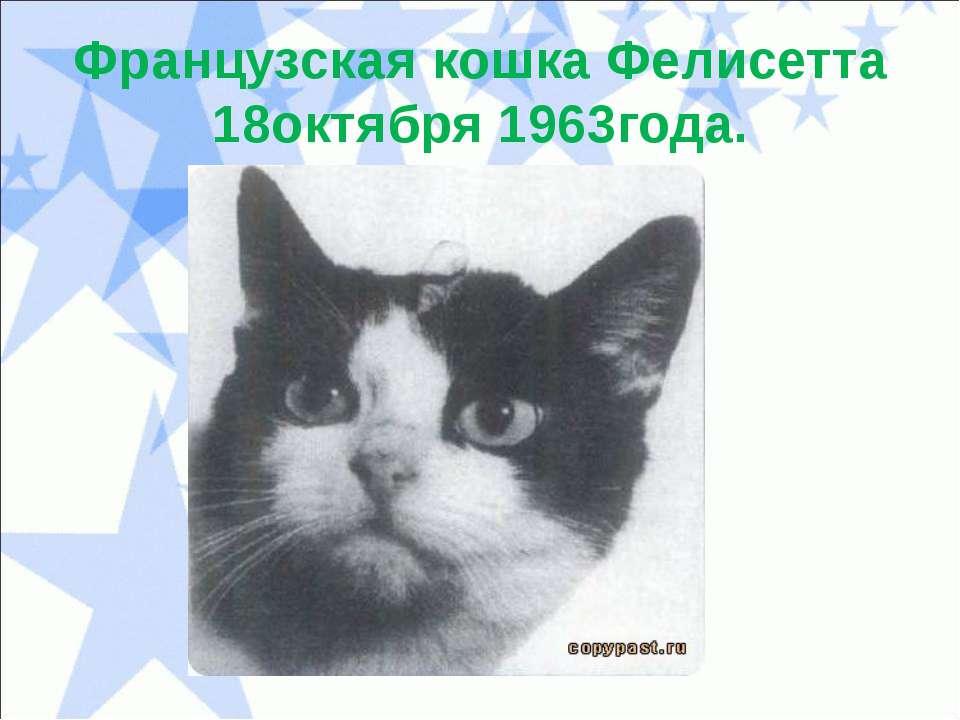 Французская кошка Фелисетта 18октября 1963года.