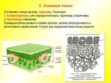 Составляют основу органов, паренхиму. Различают: 1. Ассимиляционную, или хлор...