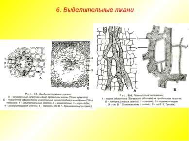 6. Выделительные ткани