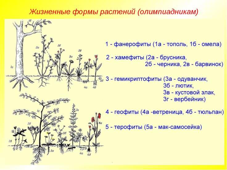 Жизненные формы растений (олимпиадникам)