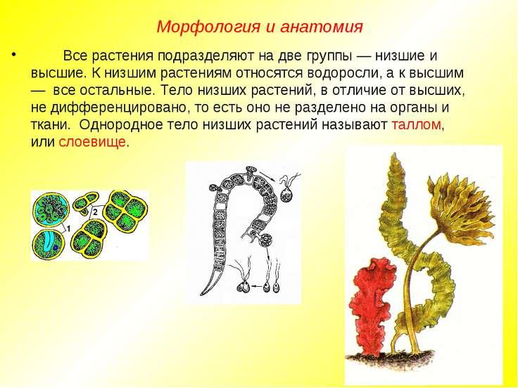 Все растения подразделяют на две группы — низшие и высшие. К низшим растениям...