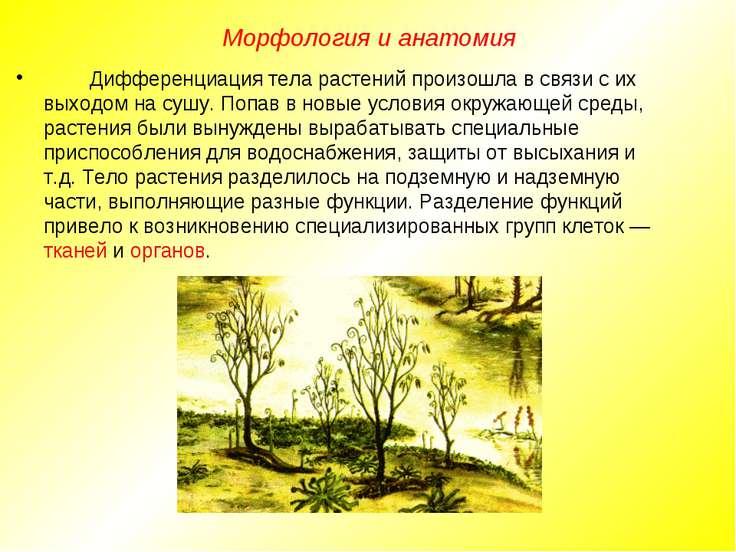 Дифференциация тела растений произошла в связи с их выходом на сушу. Попав в ...