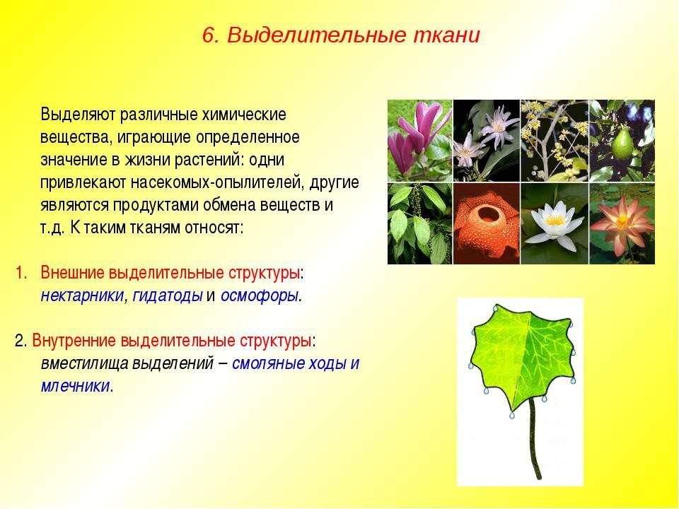 Выделяют различные химические вещества, играющие определенное значение в жизн...