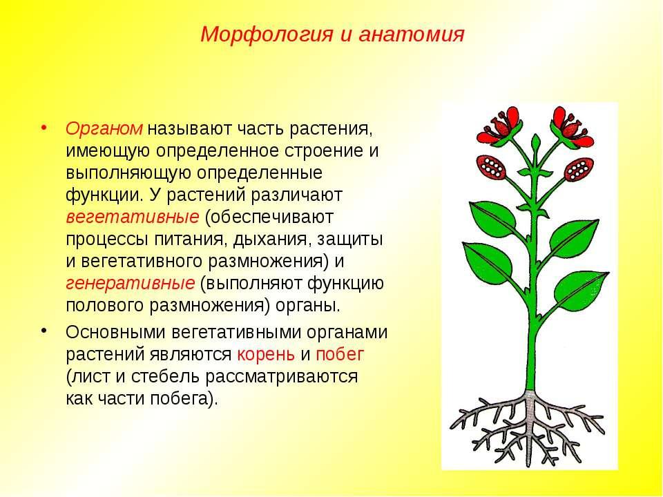 Органом называют часть растения, имеющую определенное строение и выполняющую ...