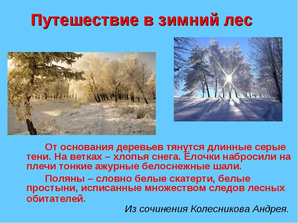 Путешествие в зимний лес От основания деревьев тянутся длинные серые тени. На...