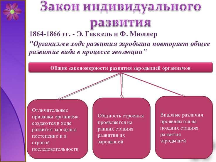 """1864-1866 гг. - Э. Геккель и Ф. Мюллер """"Организм в ходе развития зародыша пов..."""