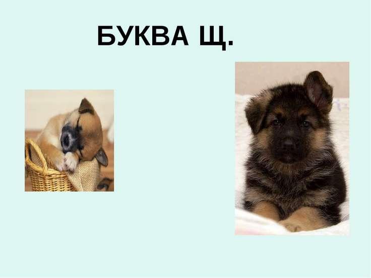 БУКВА Щ.