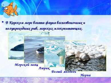 В Карском море богата фауна беспозвоночных и полупроходных рыб, морских млеко...
