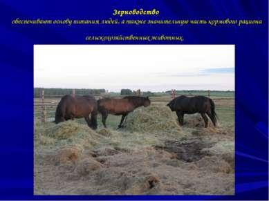 Зерноводство обеспечивают основу питания людей, а также значительную часть ко...