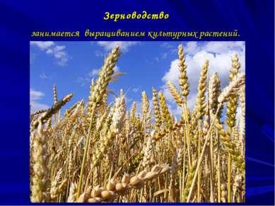 Зерноводство занимается выращиванием культурных растений.