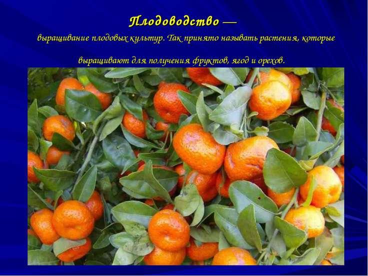 Плодоводство— выращивание плодовых культур. Так принято называть растения, к...