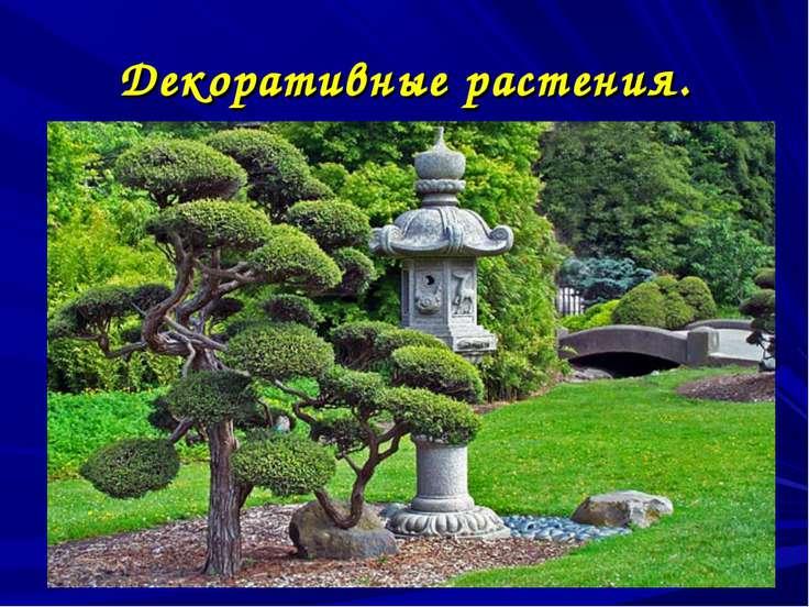 Декоративные растения.