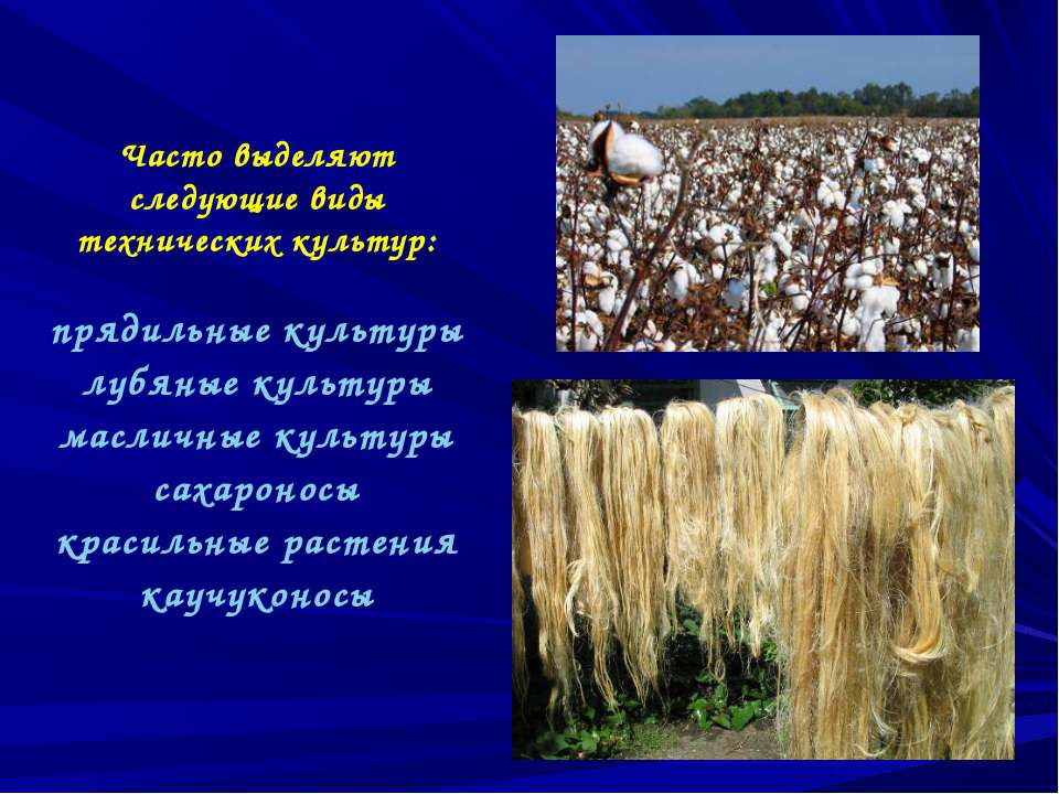 Часто выделяют следующие виды технических культур: прядильные культуры лубяны...