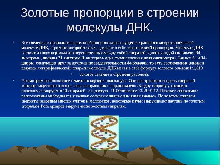 Золотые пропорции в строении молекулы ДНК. Все сведения о физиологических осо...