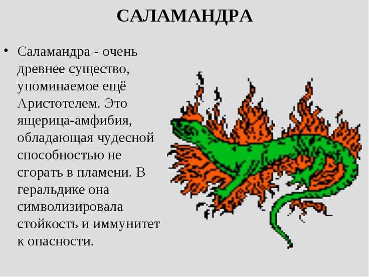 САЛАМАНДРА Саламандра - очень древнее существо, упоминаемое ещё Аристотелем. ...