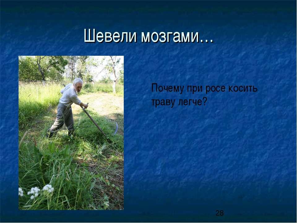 Шевели мозгами… Почему при росе косить траву легче?