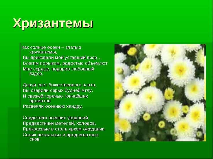 Хризантемы Как солнце осени – златые хризантемы, Вы приковали мой уставший вз...