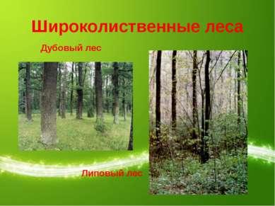 Широколиственные леса Дубовый лес Липовый лес