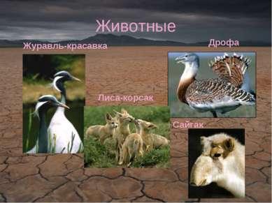 Животные Журавль-красавка Дрофа Сайгак Лиса-корсак