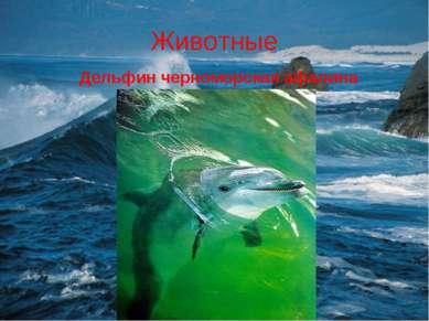 Животные Дельфин черноморская афалина