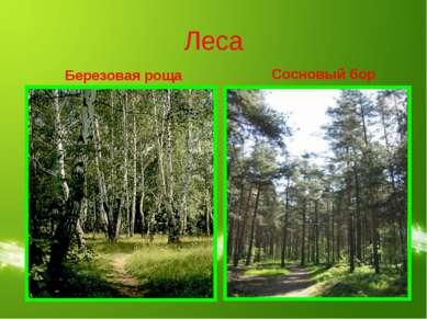 Леса Березовая роща Сосновый бор
